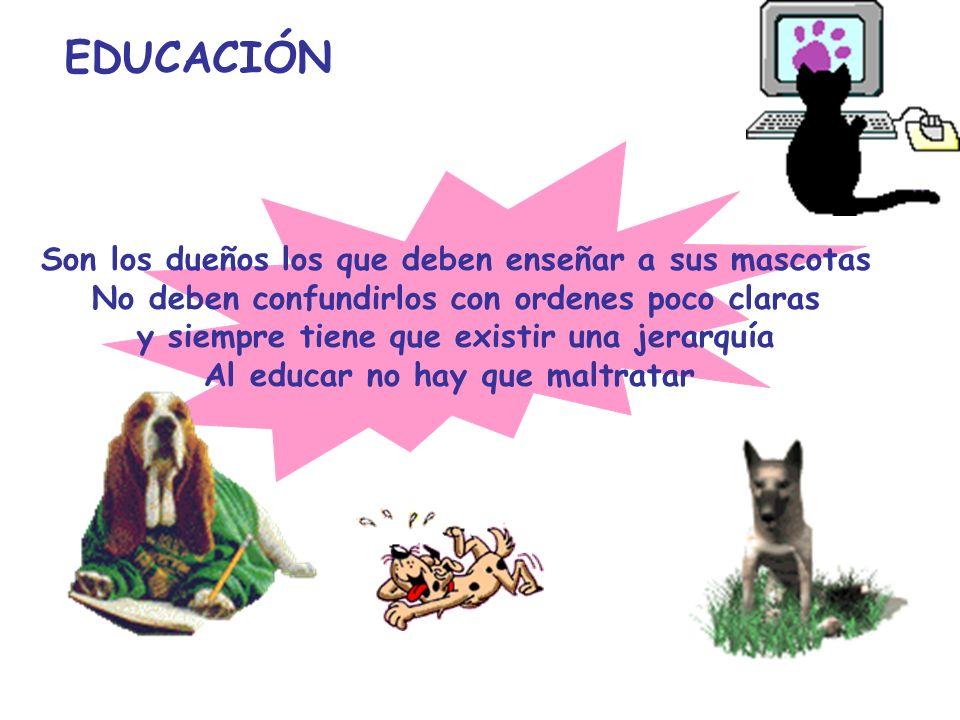 EDUCACIÓN Son los dueños los que deben enseñar a sus mascotas