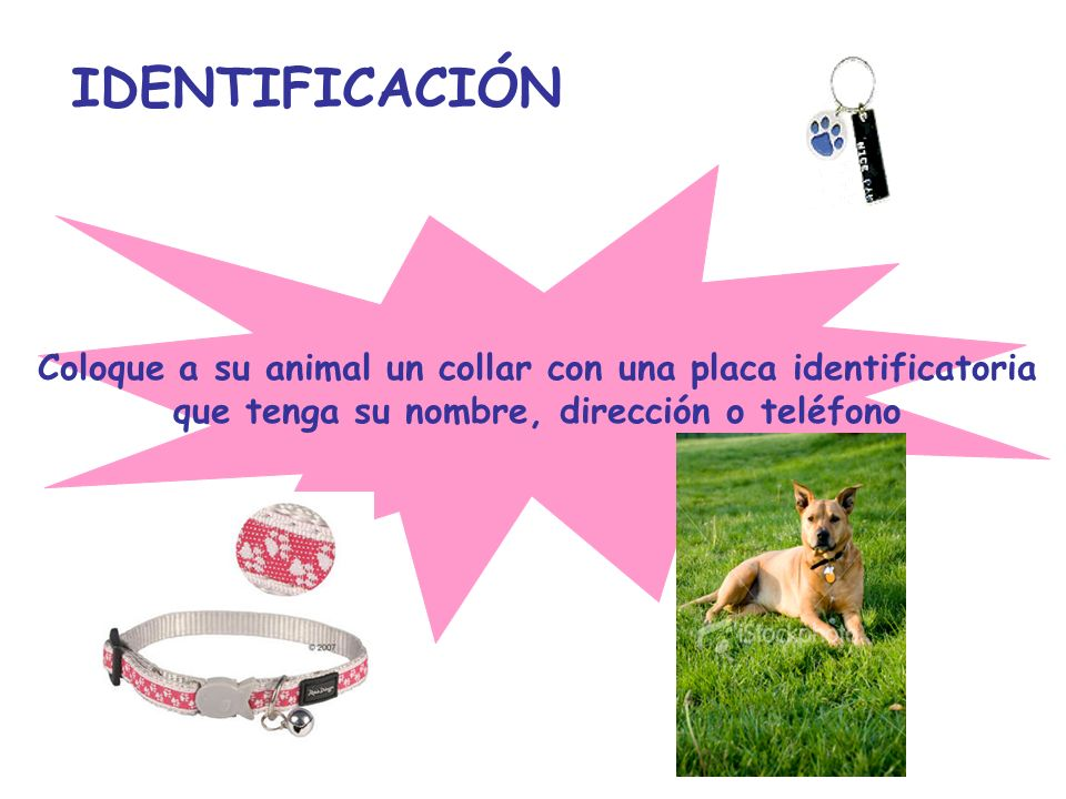IDENTIFICACIÓN Coloque a su animal un collar con una placa identificatoria.