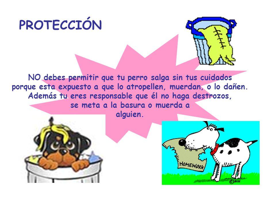 PROTECCIÓN NO debes permitir que tu perro salga sin tus cuidados
