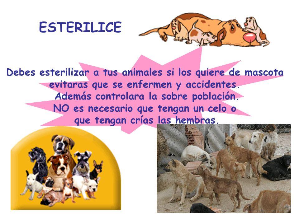 ESTERILICE Debes esterilizar a tus animales si los quiere de mascota