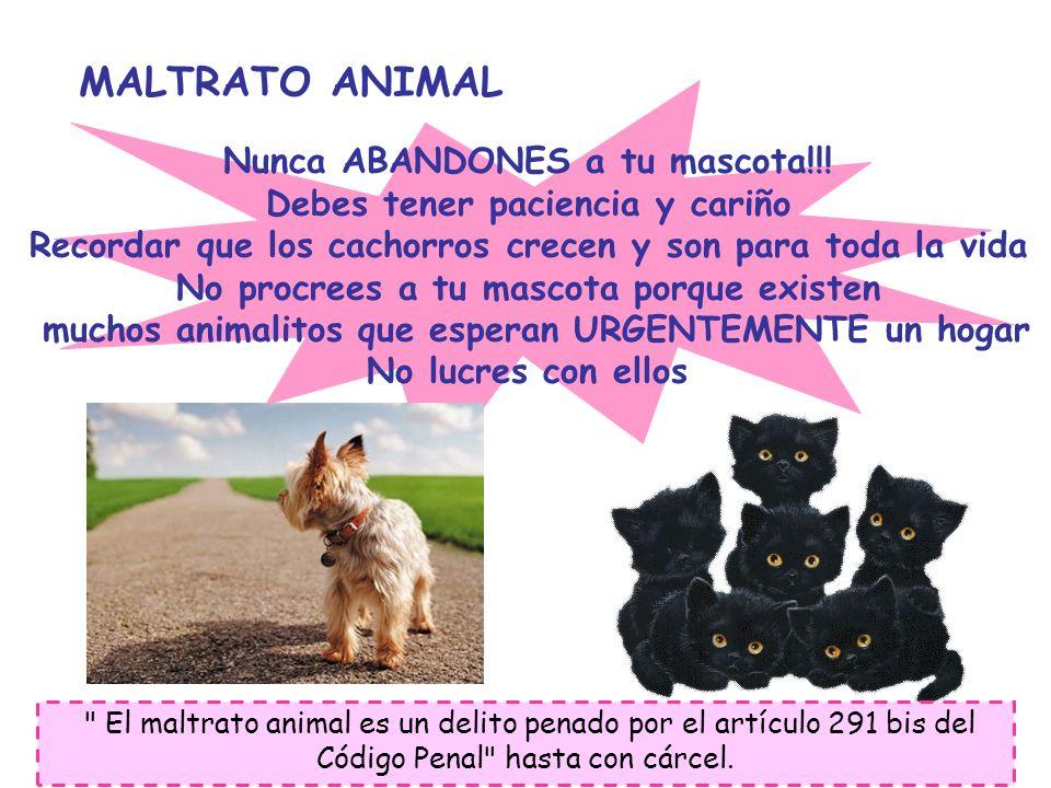 MALTRATO ANIMAL Nunca ABANDONES a tu mascota!!!
