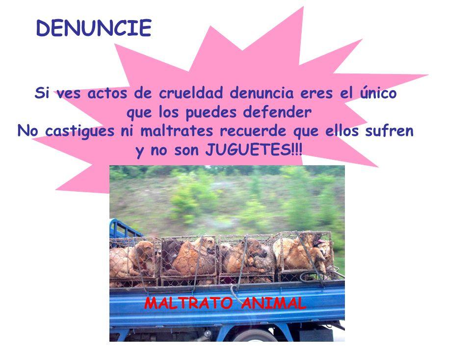 DENUNCIE Si ves actos de crueldad denuncia eres el único