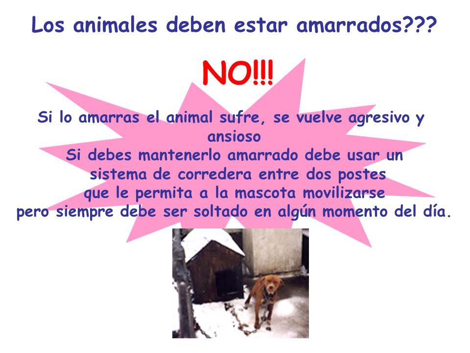NO!!! Los animales deben estar amarrados