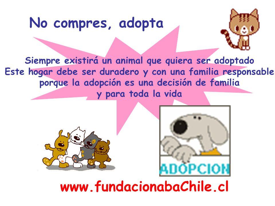 No compres, adopta www.fundacionabaChile.cl
