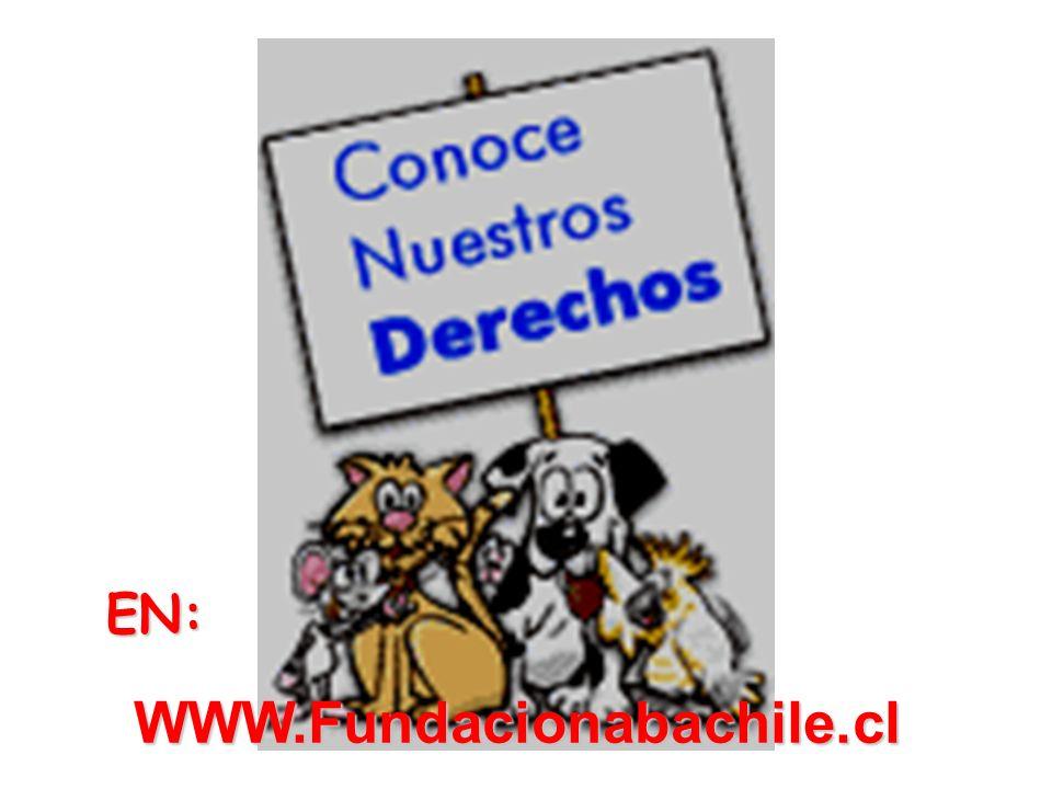 EN: WWW.Fundacionabachile.cl