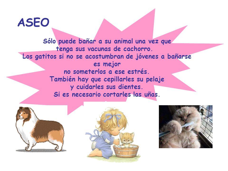 ASEO Sólo puede bañar a su animal una vez que