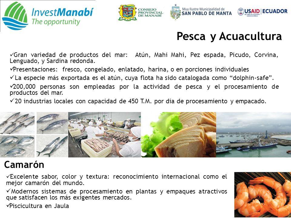 Pesca y Acuacultura Camarón