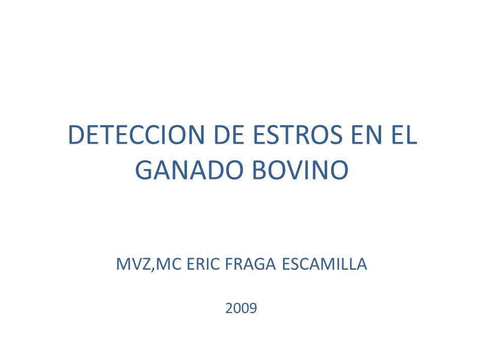 DETECCION DE ESTROS EN EL GANADO BOVINO