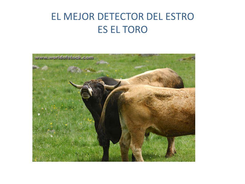 EL MEJOR DETECTOR DEL ESTRO ES EL TORO