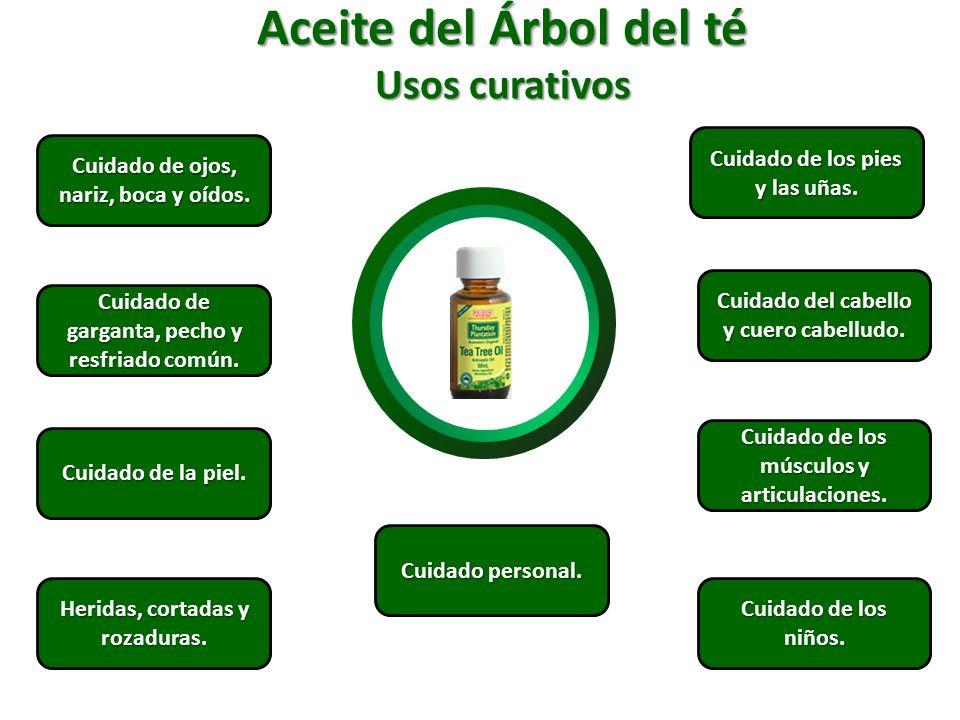 Aceite del Árbol del té Usos curativos Cuidado de los pies y las uñas.
