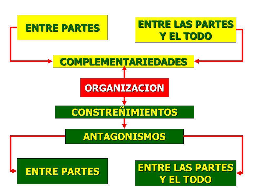 ENTRE PARTES ENTRE LAS PARTES. Y EL TODO. COMPLEMENTARIEDADES. ORGANIZACION. CONSTREÑIMIENTOS. ANTAGONISMOS.