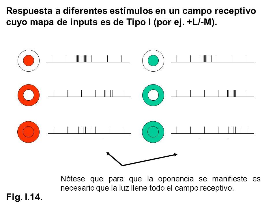 Respuesta a diferentes estímulos en un campo receptivo cuyo mapa de inputs es de Tipo I (por ej. +L/-M).