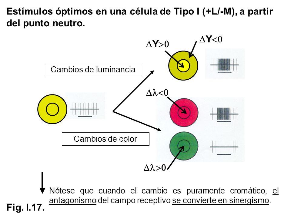 Estímulos óptimos en una célula de Tipo I (+L/-M), a partir del punto neutro.