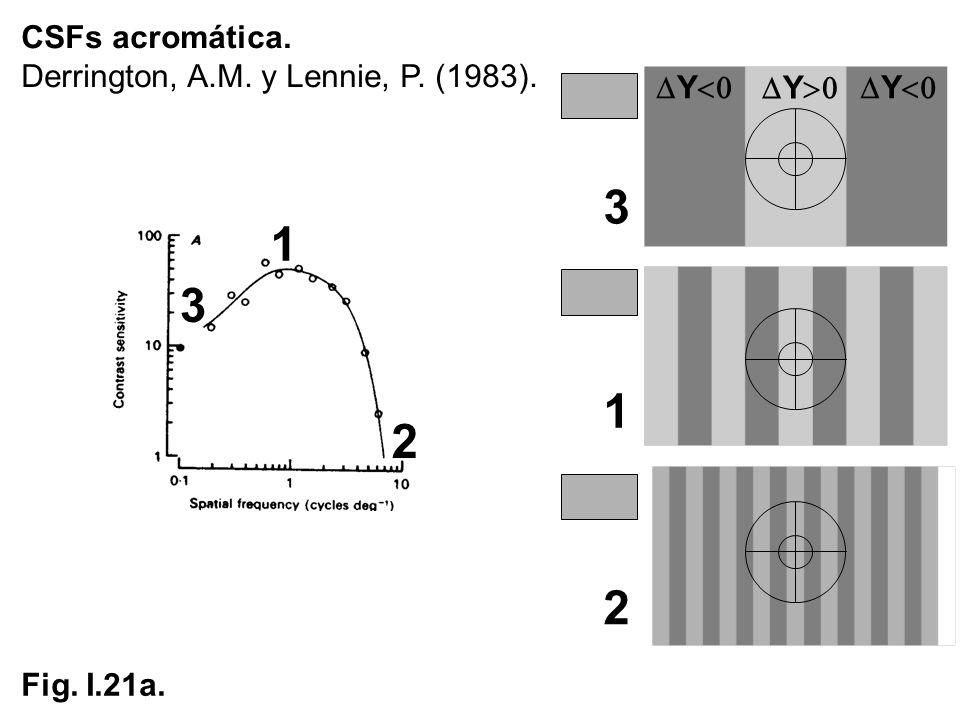 3 1 3 1 2 2 CSFs acromática. Derrington, A.M. y Lennie, P. (1983).
