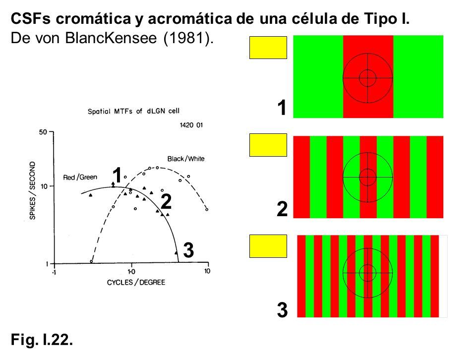 1 1 2 2 3 3 CSFs cromática y acromática de una célula de Tipo I.