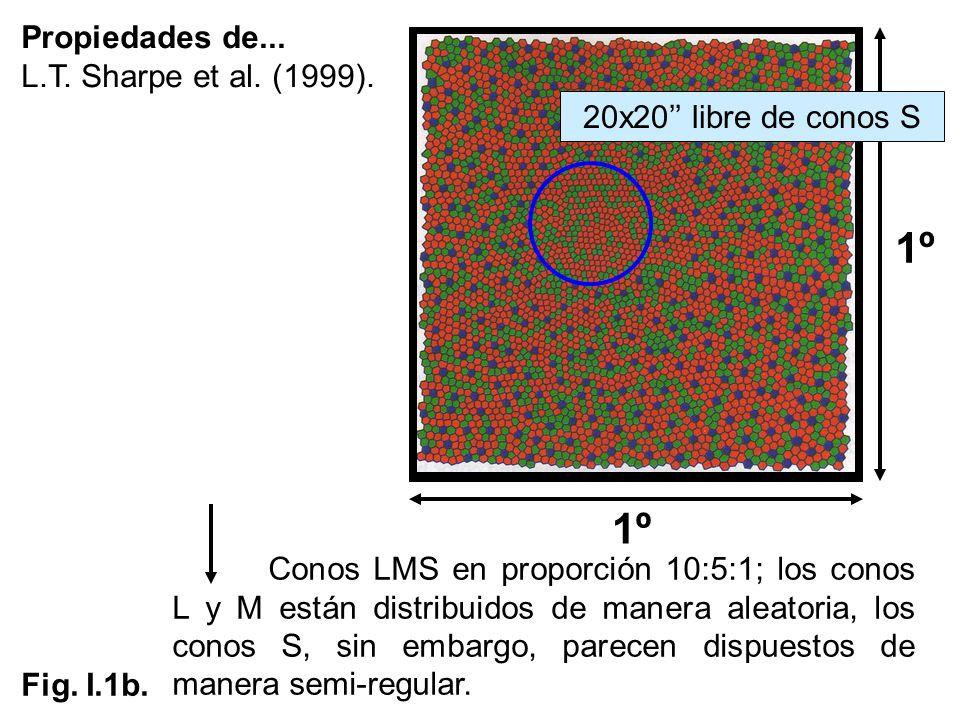 1º Propiedades de... L.T. Sharpe et al. (1999).