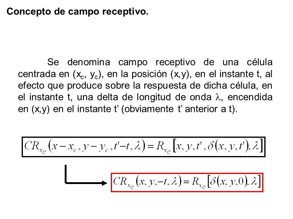 Concepto de campo receptivo.