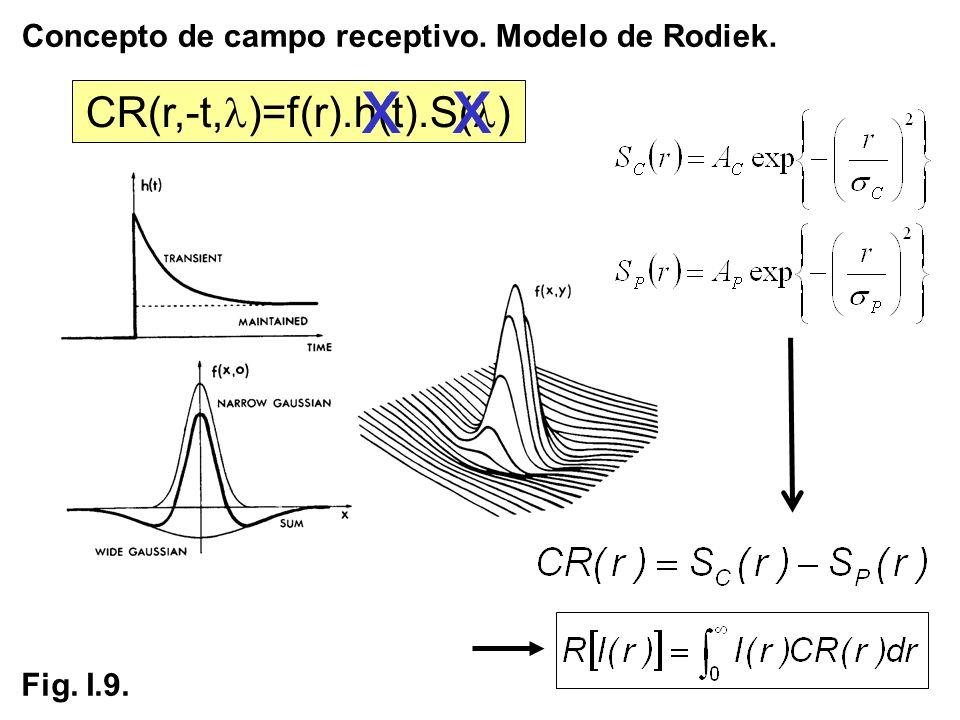Concepto de campo receptivo. Modelo de Rodiek.
