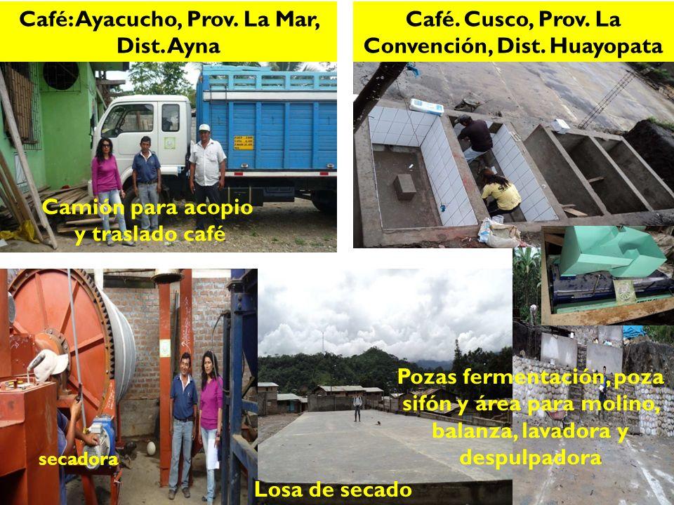 Café: Ayacucho, Prov. La Mar, Dist. Ayna