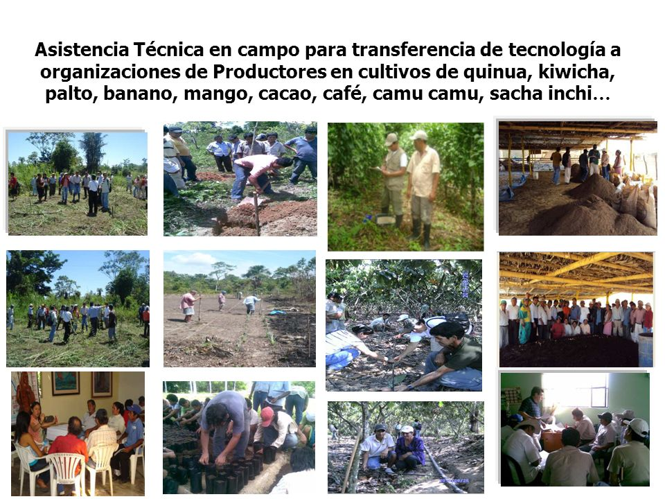 Asistencia Técnica en campo para transferencia de tecnología a organizaciones de Productores en cultivos de quinua, kiwicha, palto, banano, mango, cacao, café, camu camu, sacha inchi…