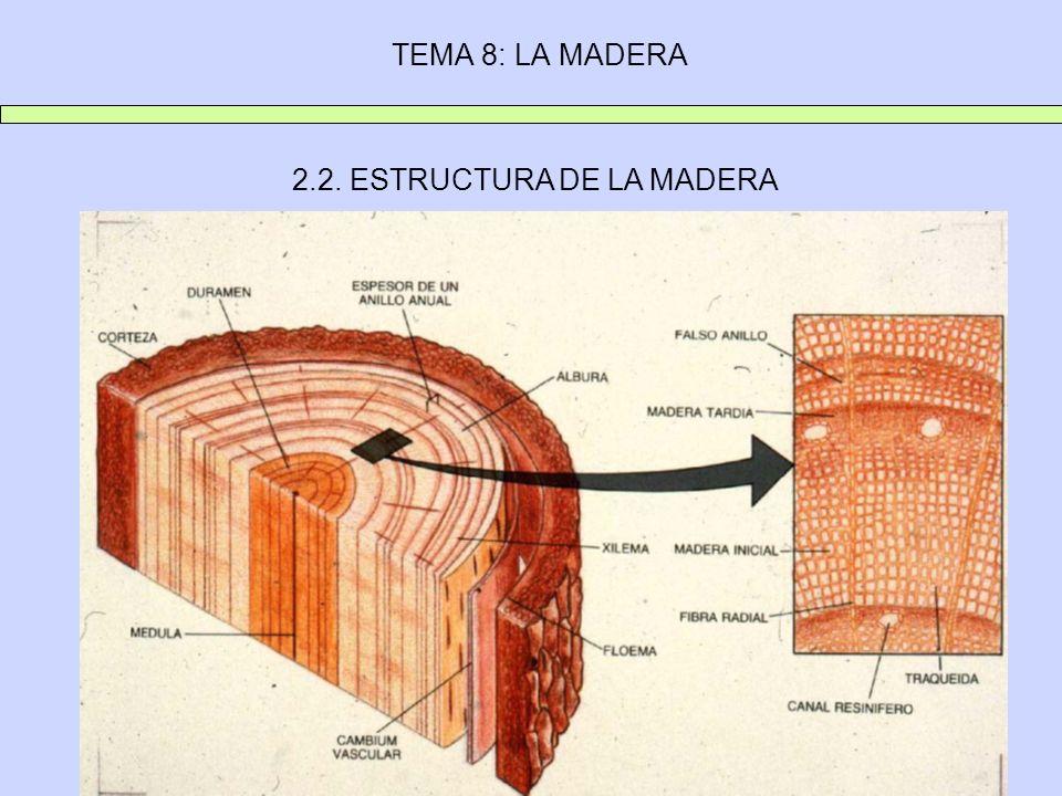 2.2. ESTRUCTURA DE LA MADERA