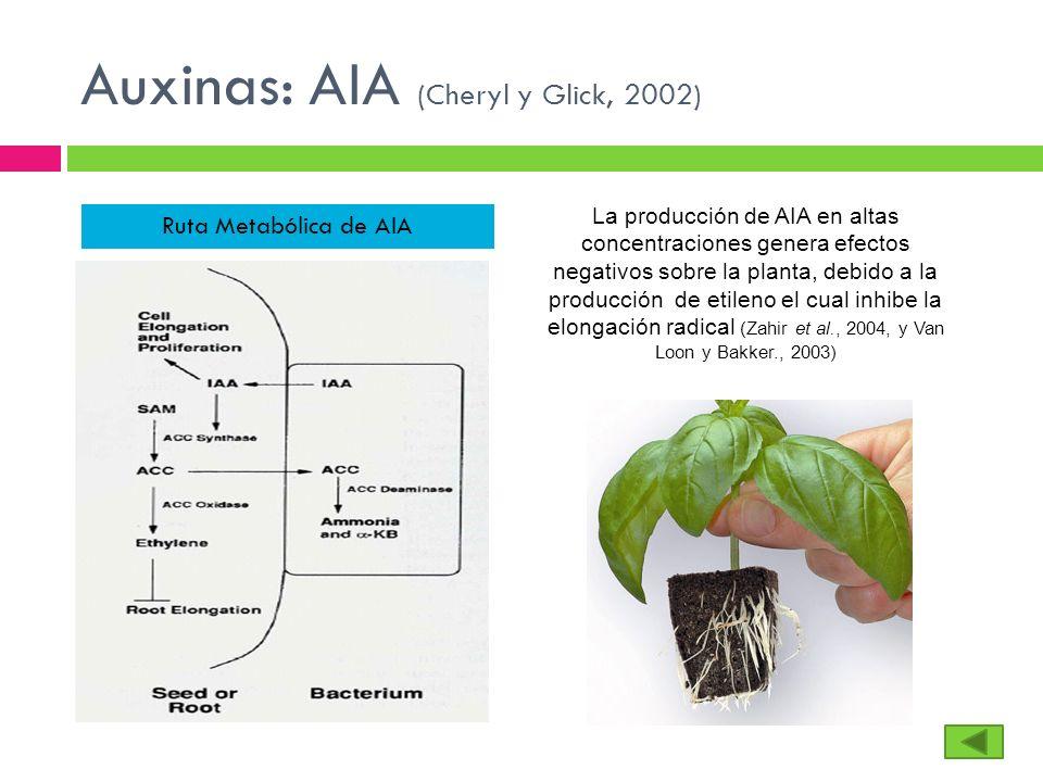 Auxinas: AIA (Cheryl y Glick, 2002)