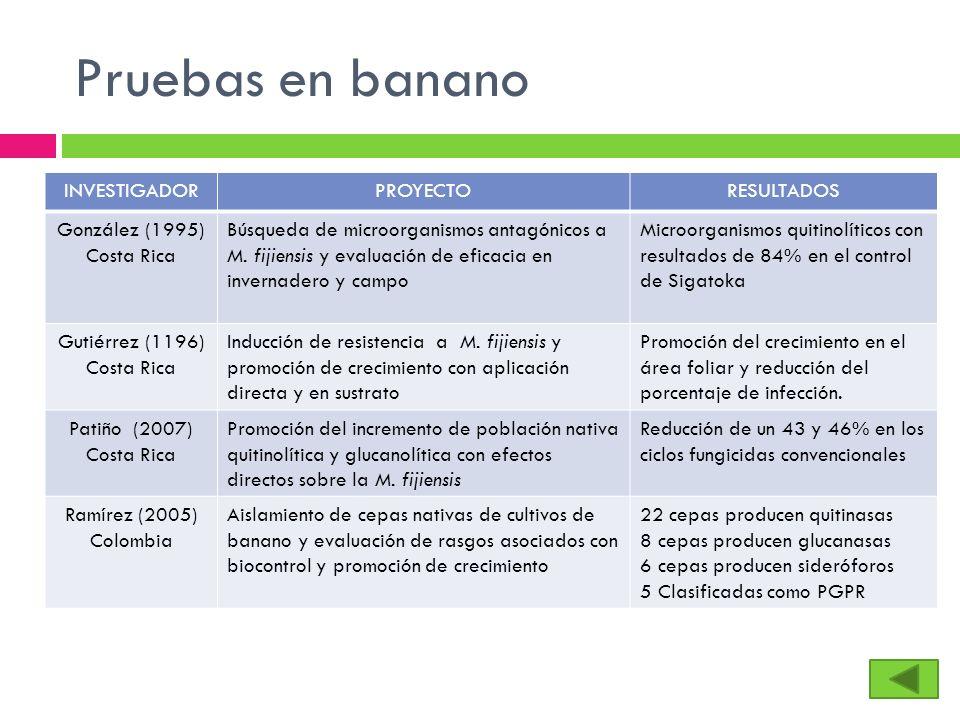 Pruebas en banano INVESTIGADOR PROYECTO RESULTADOS González (1995)