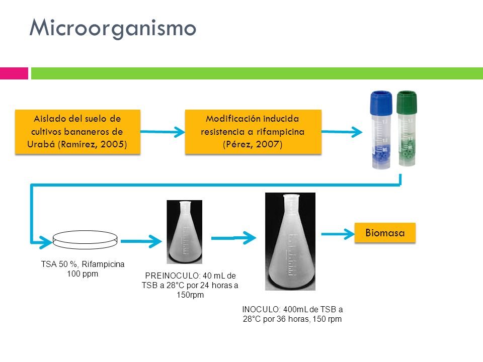Microorganismo Biomasa