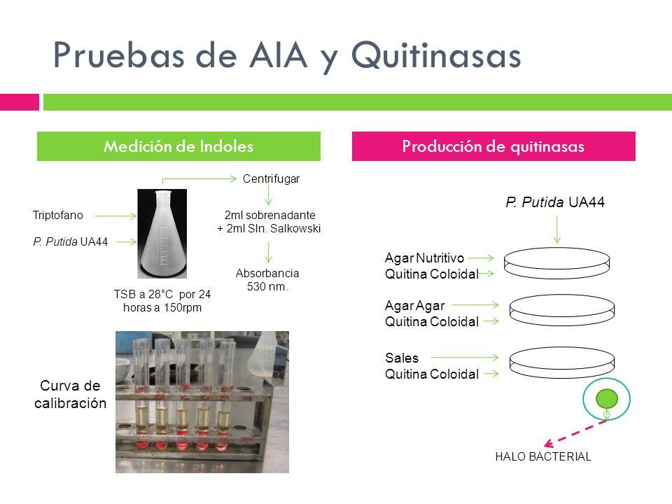 Pruebas de AIA y Quitinasas