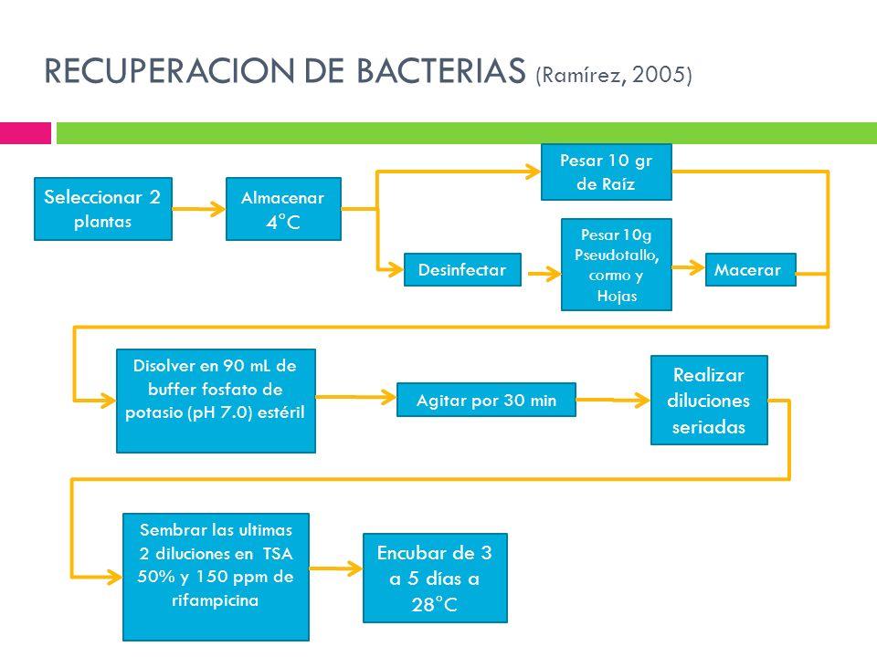 RECUPERACION DE BACTERIAS (Ramírez, 2005)