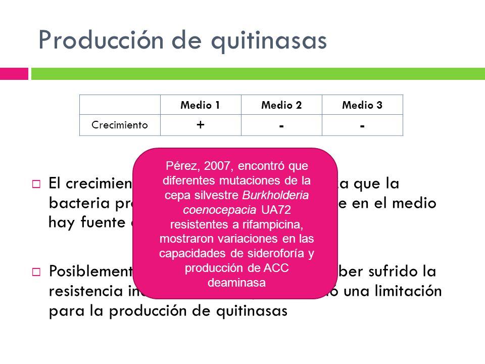 Producción de quitinasas