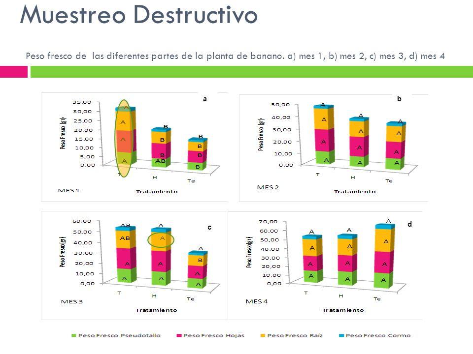 Muestreo Destructivo Peso fresco de las diferentes partes de la planta de banano. a) mes 1, b) mes 2, c) mes 3, d) mes 4.