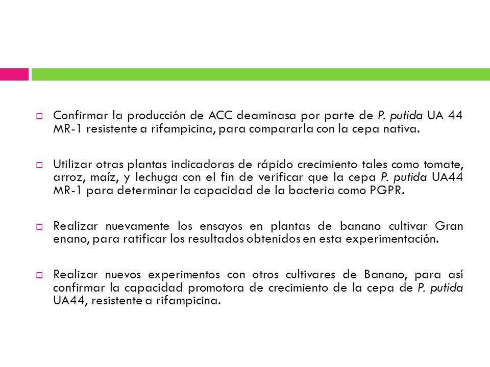 Confirmar la producción de ACC deaminasa por parte de P