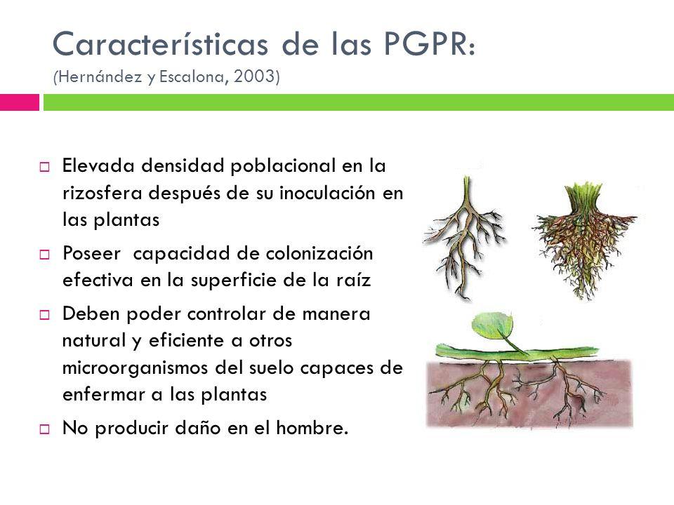 Características de las PGPR: (Hernández y Escalona, 2003)