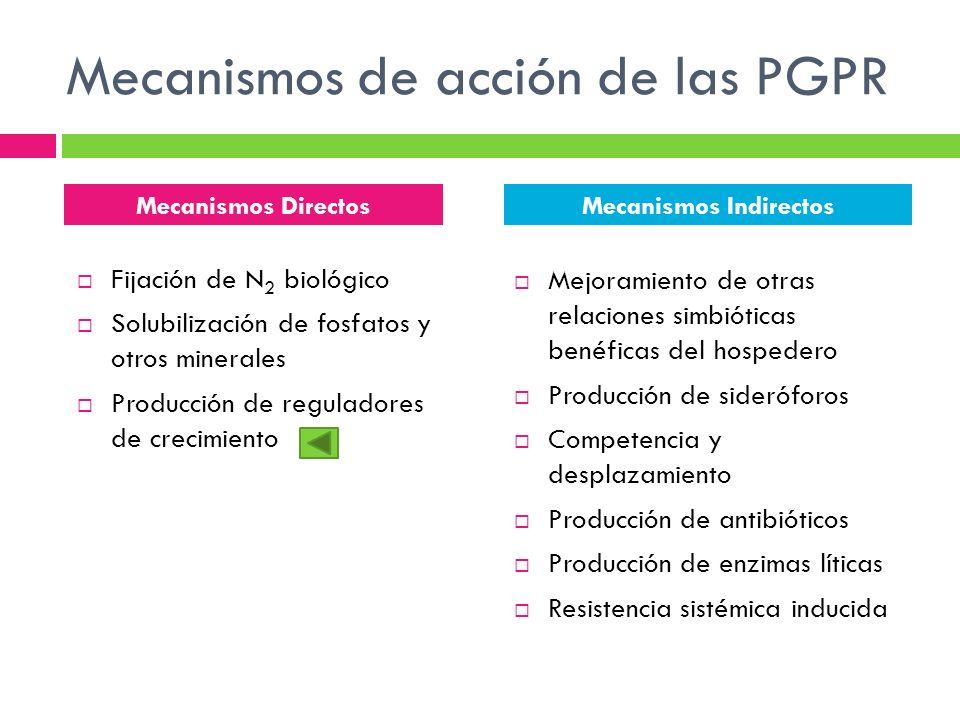 Mecanismos de acción de las PGPR