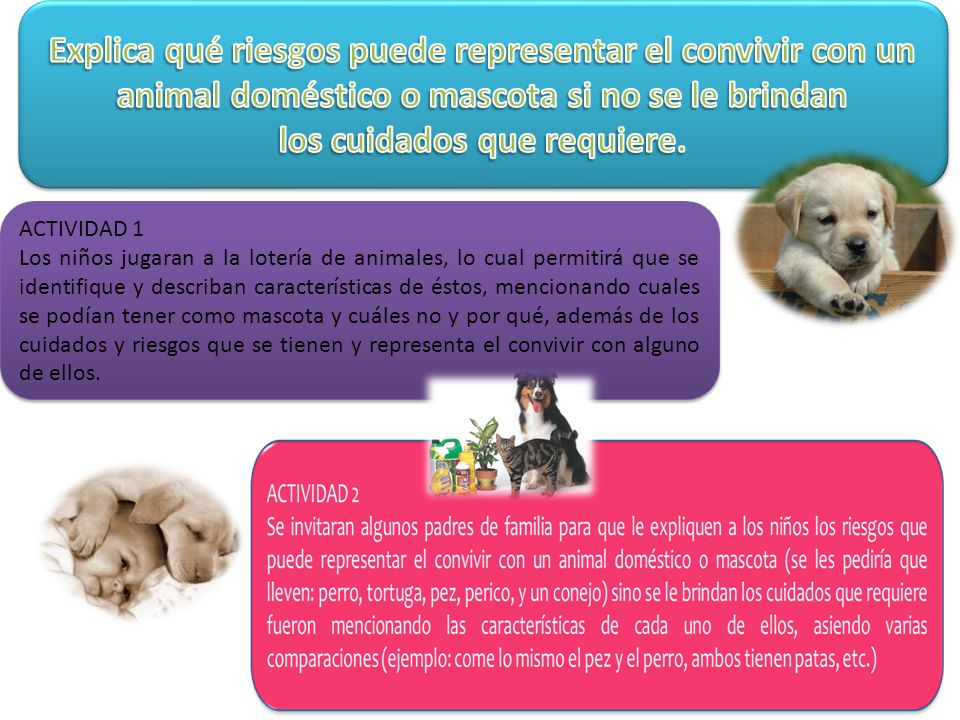Explica qué riesgos puede representar el convivir con un animal doméstico o mascota si no se le brindan los cuidados que requiere.