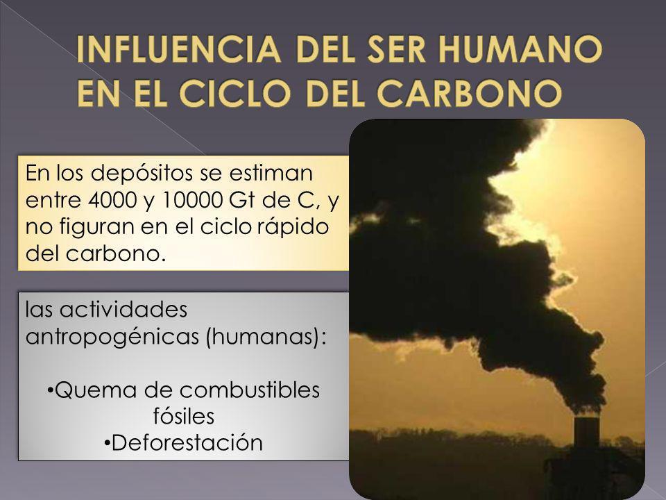 INFLUENCIA DEL SER HUMANO EN EL CICLO DEL CARBONO