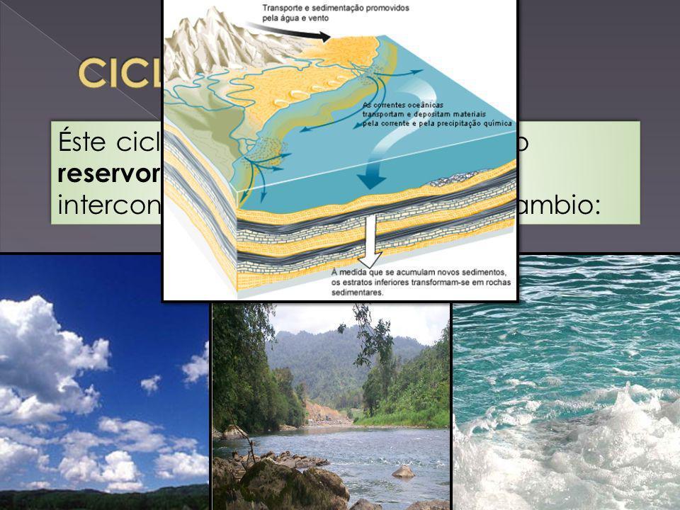 CICLO DEL CARBONO Éste ciclo está constituido por cuatro reservorios principales de carbono interconectados por rutas de intercambio: