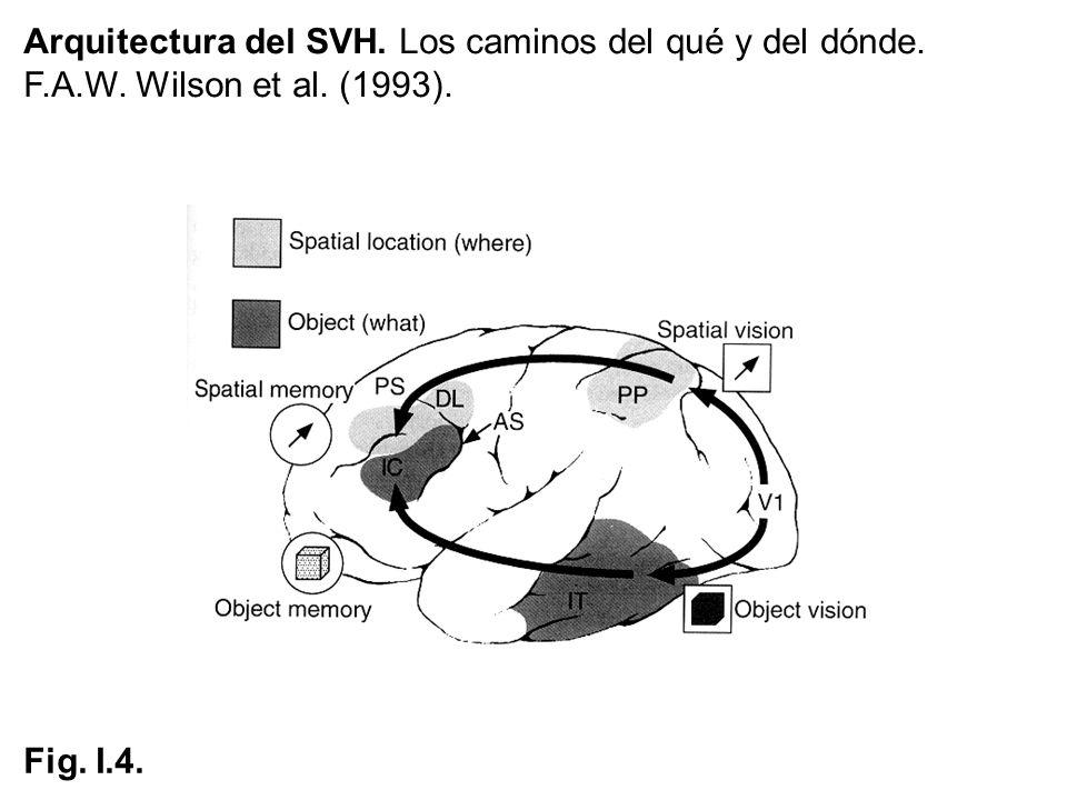 Arquitectura del SVH. Los caminos del qué y del dónde.