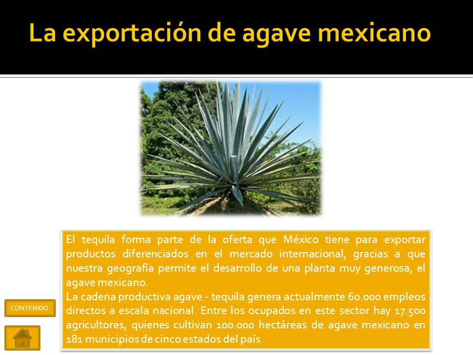 La exportación de agave mexicano