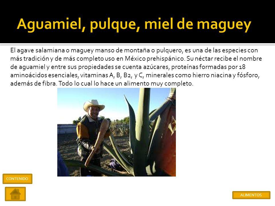 Aguamiel, pulque, miel de maguey