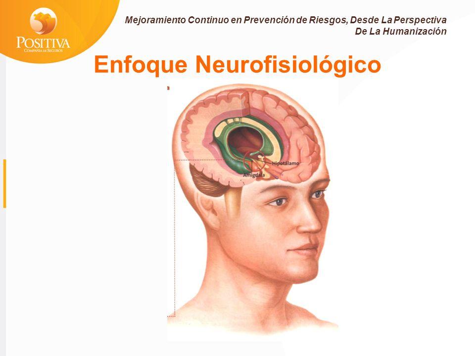 Enfoque Neurofisiológico