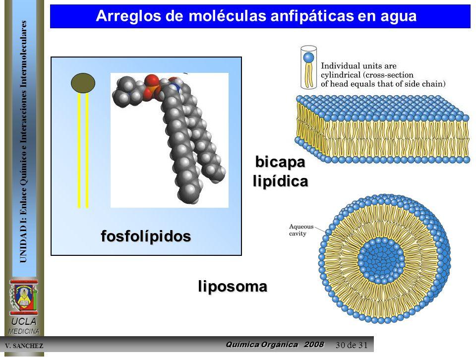 Arreglos de moléculas anfipáticas en agua