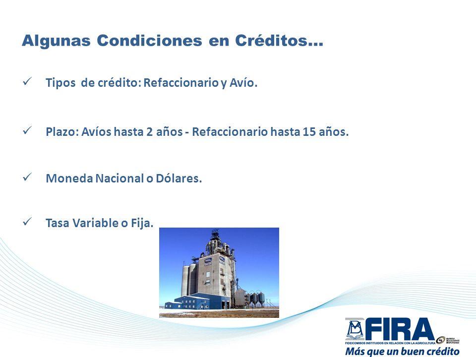 Algunas Condiciones en Créditos…