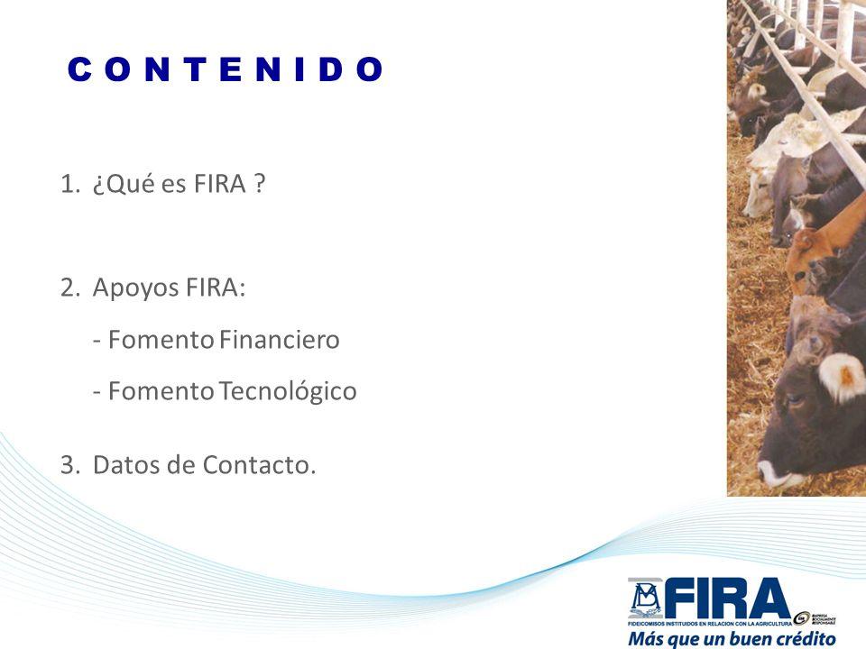 C O N T E N I D O ¿Qué es FIRA Apoyos FIRA: - Fomento Financiero