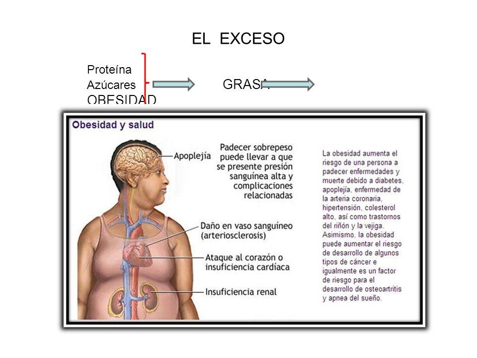 EL EXCESO Proteína Azúcares GRASA OBESIDAD Grasa