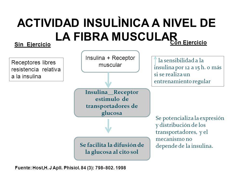 ACTIVIDAD INSULÌNICA A NIVEL DE LA FIBRA MUSCULAR