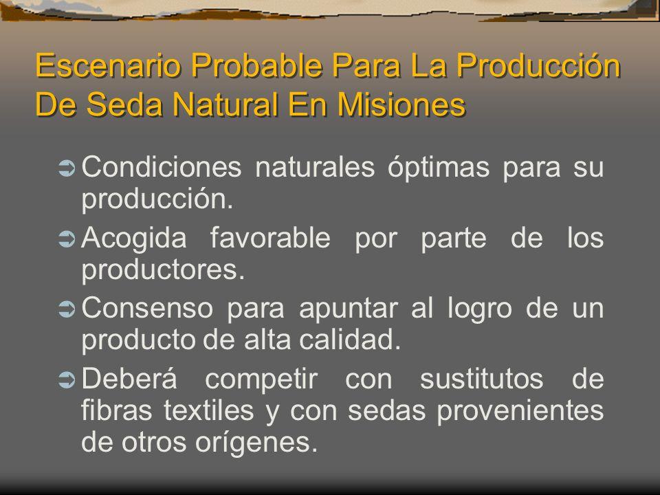 Escenario Probable Para La Producción De Seda Natural En Misiones