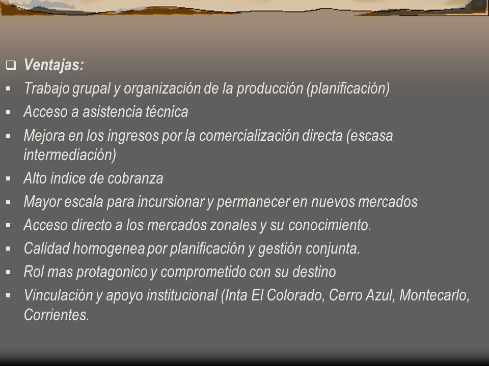 Ventajas: Trabajo grupal y organización de la producción (planificación) Acceso a asistencia técnica.