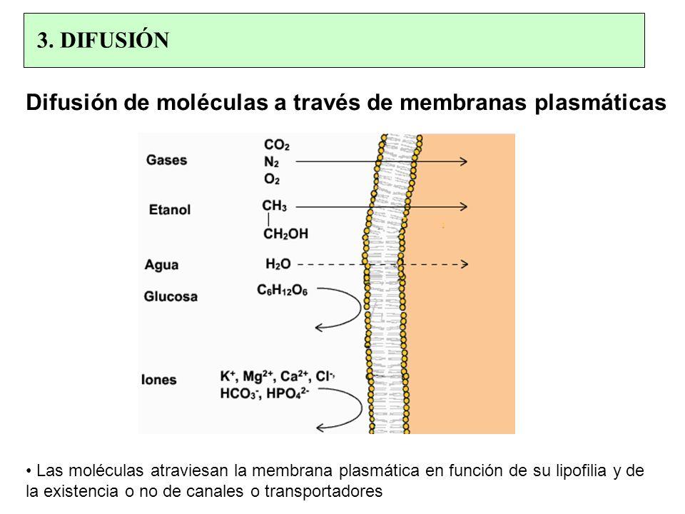 Difusión de moléculas a través de membranas plasmáticas